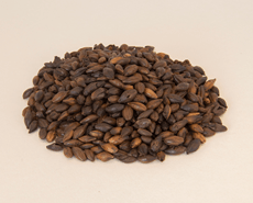 Best Black Malt